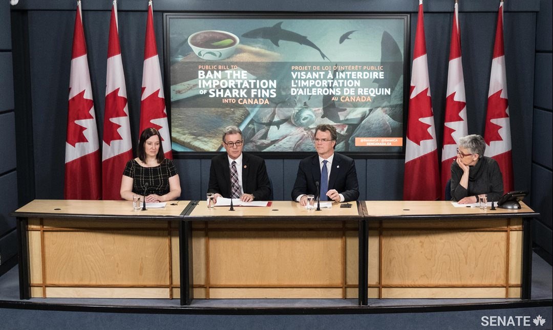 Senator Michael L. MacDonald announces that he will table a bill to ban the importation of shark fins into Canada. He is joined by MP Fin Donnelly and Kim Elmslie, Campaign Director at Oceana Canada, both supporters of the bill.