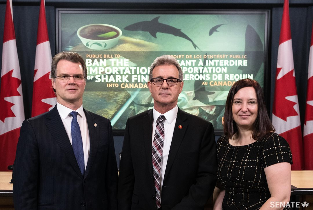MP Fin Donnelly, Senator Michael L. MacDonald and Kim Elmslie, Campaign Director at Oceana Canada want to ensure that Canada is taking a leading role in ending the inhumane and wasteful practice of shark finning.