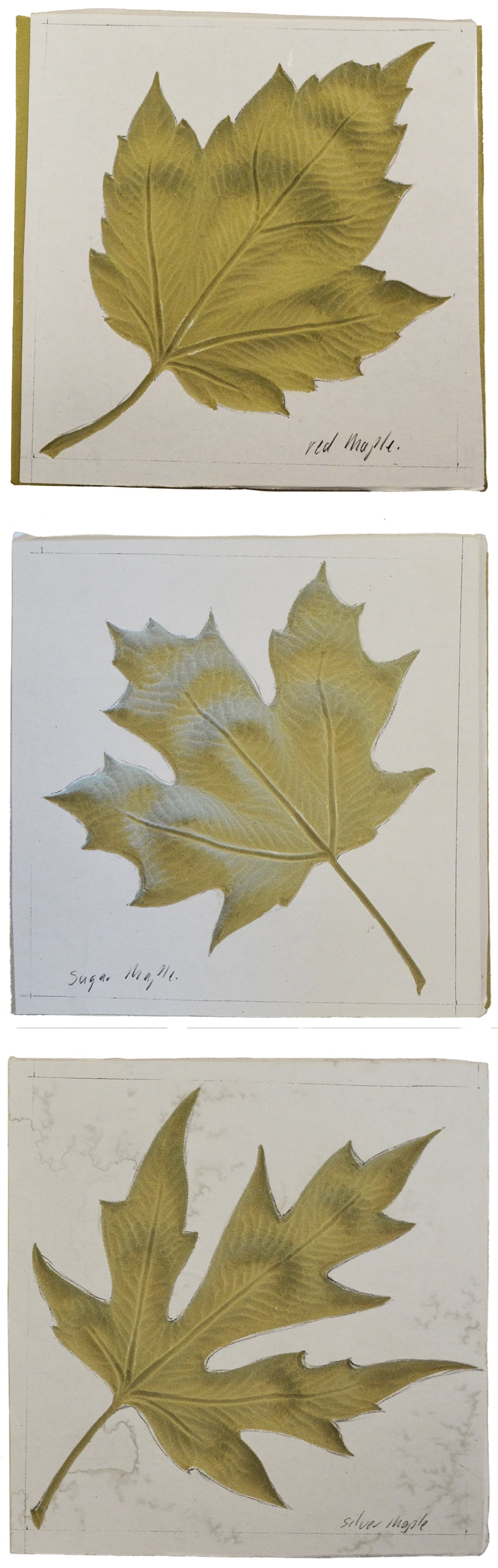 Templates for three of the 10 maple leaf designs that will figure prominently in the temporary Senate chamber: (from top to bottom) the Red, Sugar and Silver Maple.