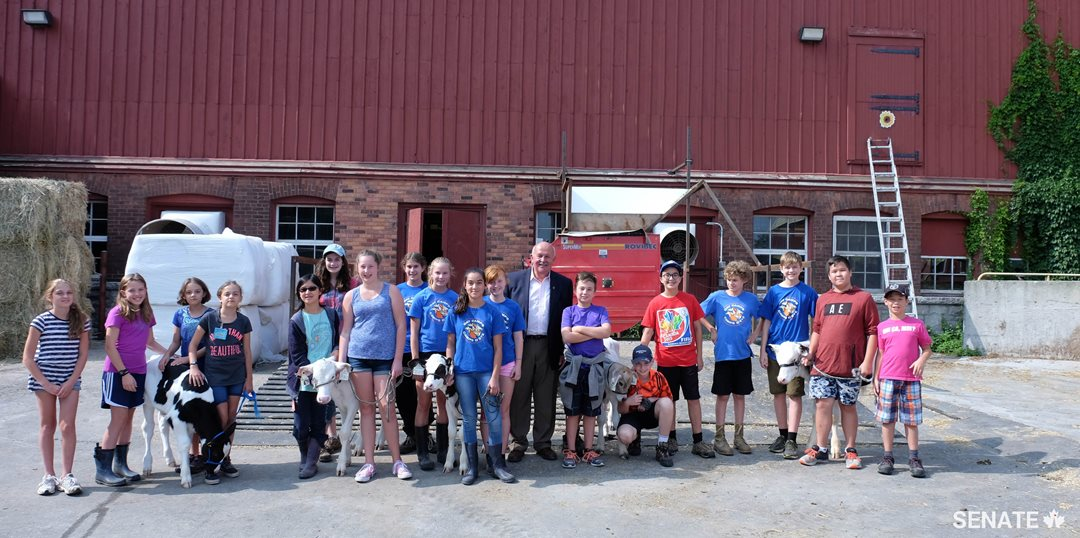 Senator Terry Mercer and the agriculture museum's junior farmers prepare for the Calf Show.
