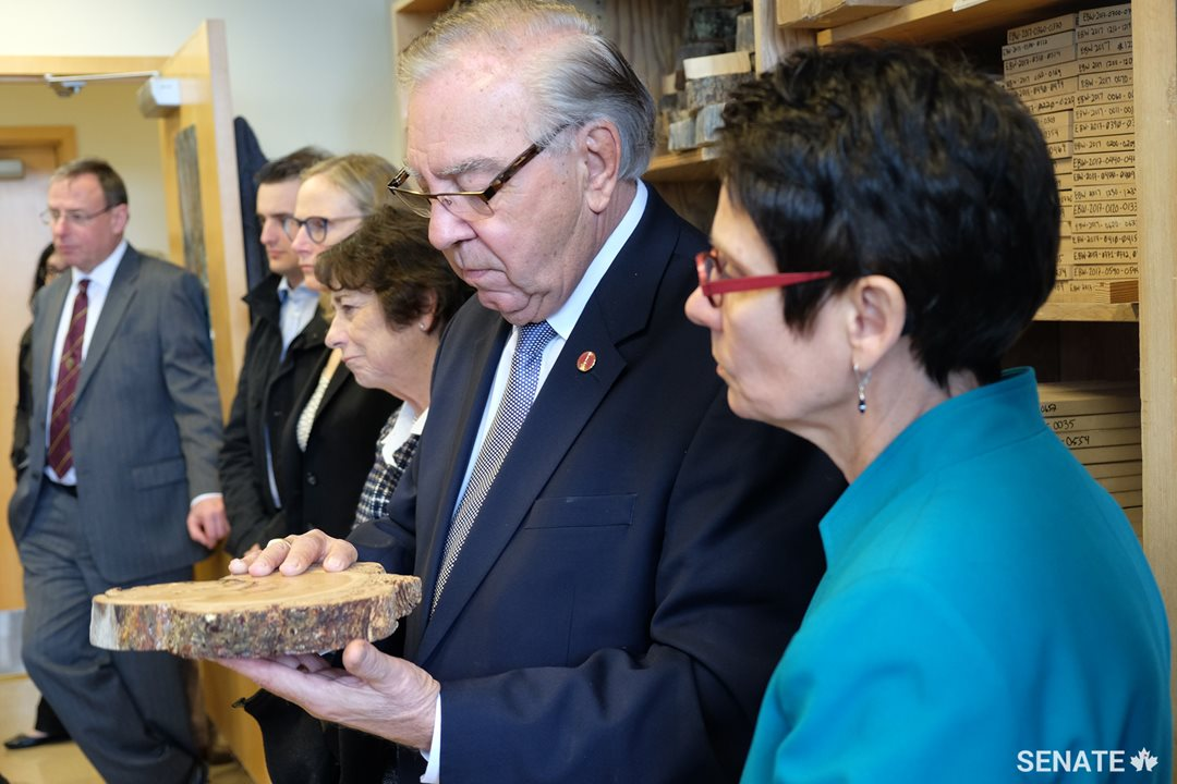 Senator Ghislain Maltais examines a damaged tree sample, while senators Raymonde Gagné and Diane F. Griffin learn about the impact of climate change on forest fire patterns over time.