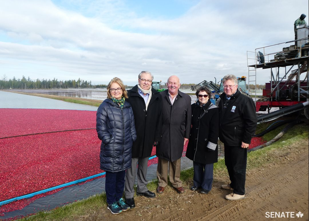 Senators Julie Miville-Dechêne, Ghislain Maltais, Terry Mercer, Diane Griffin and Robert Black visit the cranberry fields of the world's largest organic cranberry producer, Fruit d'Or.