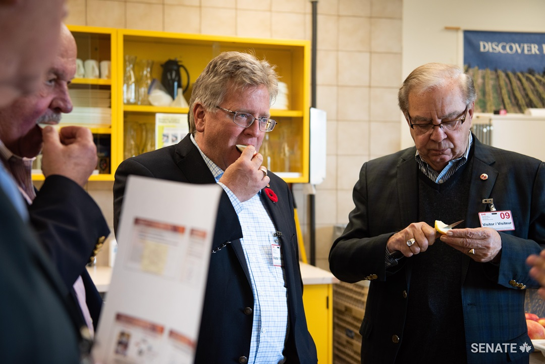 Senators Mercer, Black and Maltais taste a new variety of apple, the 1080, which is not yet on the market. It is resistant to browning and is currently being taste-tested, as are several other new varieties of apple at the Summerland research centre.