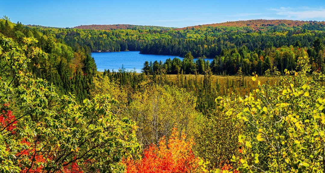A photo of Algonquin Provincial Park.
